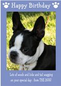 "Boston Terrier-Happy Birthday - ""From The Dog"" Theme"